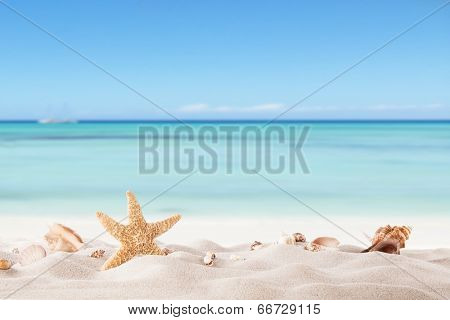 Summer concept with sandy beach, shells and starfish.