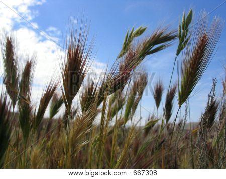 Spring Grasses
