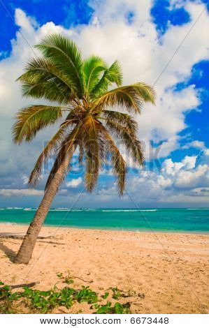 Caribbean Palm Tree & Beach