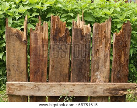 Fragment Of Fence Of Rotten Boards On The Background Of Green Plants.