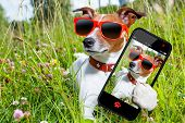 dog in grass taking a selfie looking so cool poster