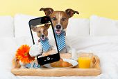 dog taking a selfie in bed in the morning poster