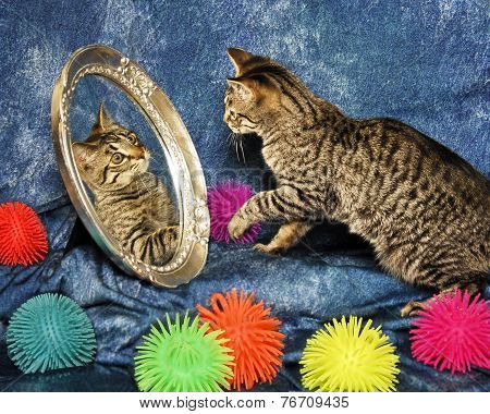 Kitten In A Mirror