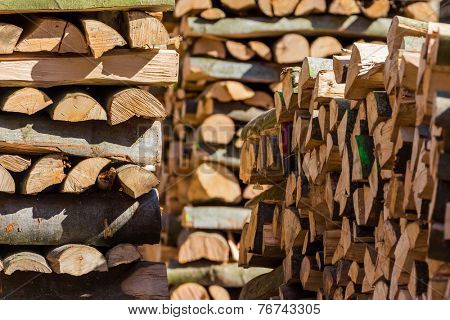 trees in a forest were re-cut in wood working. natural, energy-friendly and sustainable heat.