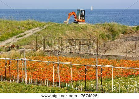 Flower Cultivation By The Sea Italy