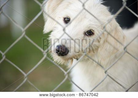 Cute Puppy Dog Looking Through Fence