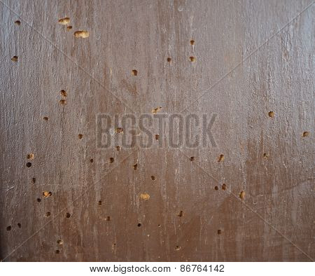 Wood Damaged By Furniture Beetle