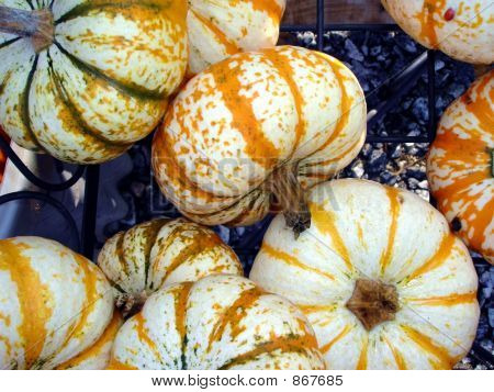 White Tiny Pumpkins