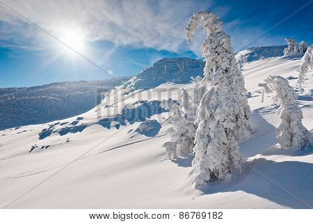 Snowy trees and mountains