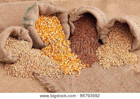 Organic Seeds:  Buckwheat, Corn Flax And Wheat In Yute Sack
