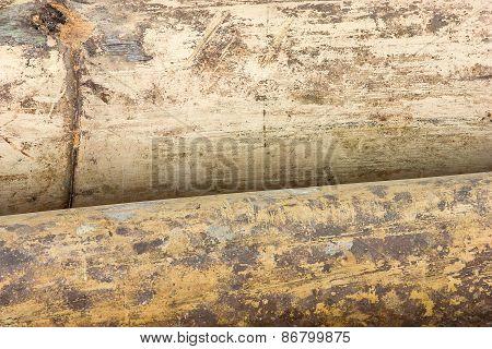 Macro Dry Bamboo