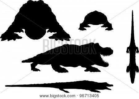 Reptiles Alligator