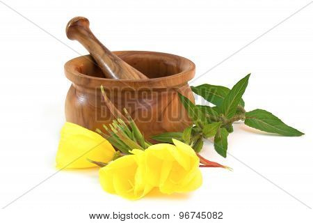 Evening Primrose With Wooden Mortar