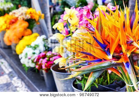Strelitzia Reginae Flowers Closeup (bird Of Paradise Flower) At Market
