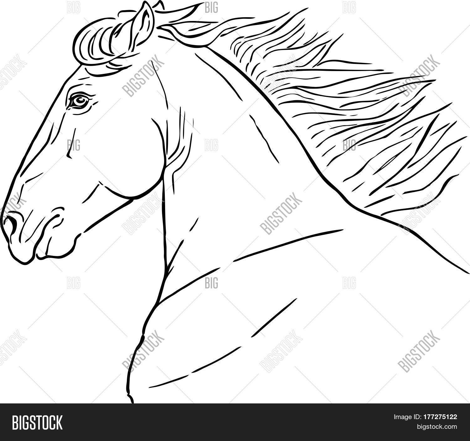 Line Drawing Horse S Vector Photo Free Trial Bigstock