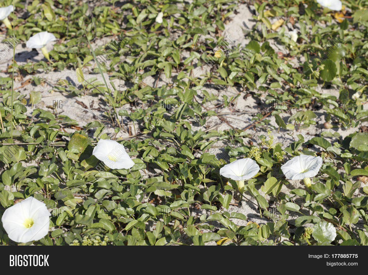 White Petals Yellow Image Photo Free Trial Bigstock