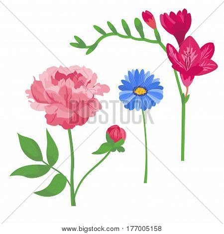 Cartoon petal vintage floral vector bouquet garden flower botanical natural peonies illustration and summer floral greeting card spring blossom. Botany colorful rose flora element decoration.