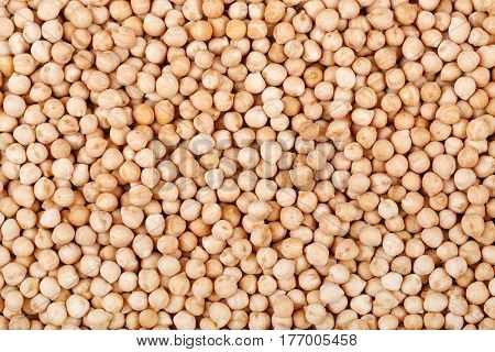 dried chickpea as background. Closeup uncooked chickpea top view. Vegan healthy nutrition