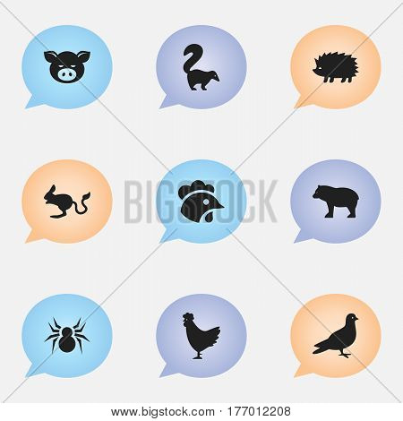 Set Of 9 Editable Zoo Icons. Includes Symbols Such As Pigeon, Panda, Arachind. Can Be Used For Web, Mobile, UI And Infographic Design.