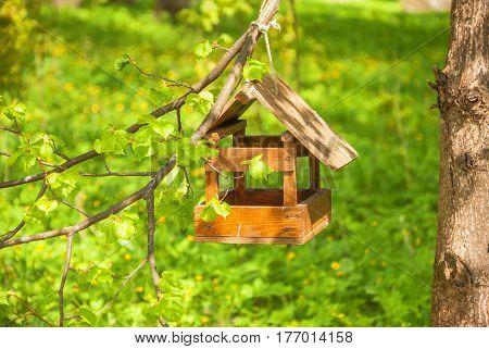 Wooden bird feeder hanging on tree in spring forest