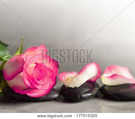 Spa stones and rose petals over grey background. Spa concept.
