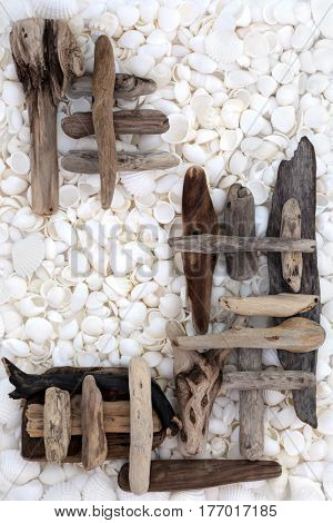 Natural driftwood and white seashell abstract forming a background.