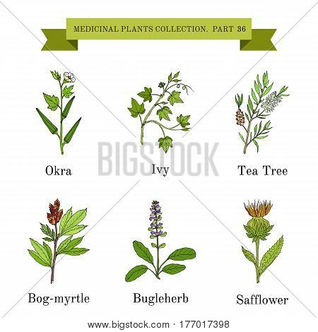 Vintage collection of hand drawn medical herbs and plants. Botanical vector illustration