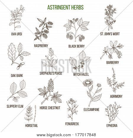 Astringent herbs. Hand drawn vector set of medicinal plants