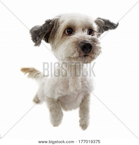 An Adorable Mixed Breed Dog Standing On Two Legs