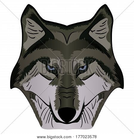 Cartoon Vector Mascot Image Grey Wolf Head isolated on white background