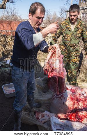 Butchers Cut The Carcass Of Bull, Russia