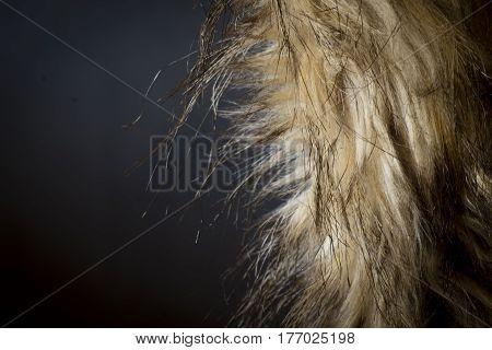 Fur Coat over Dark Background, horizontal composition