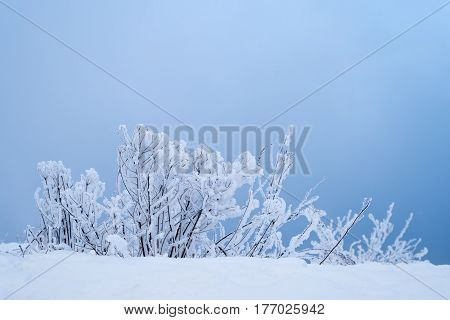 Winter background with bushes covered with snow in blue. Shot with soft focus. Retouched and vignette is added.
