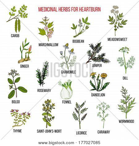 Best herbal remedies for heartburn. Hand drawn vector set of medicinal plants poster
