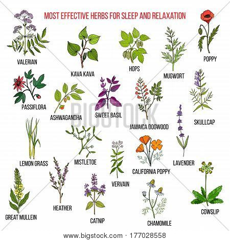 Best herbal remedies for sleep and relaxation. Hand drawn set of medicinal herbs