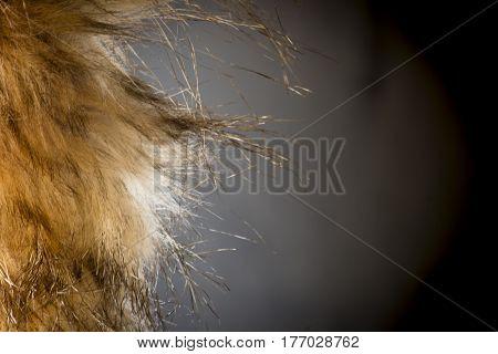 Close up of Fur Coat over Dark Background