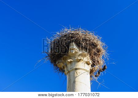 Nest Of Storks On Pillar. Roman Ruins, Ancient Roman City Of Volubilis. Morocco