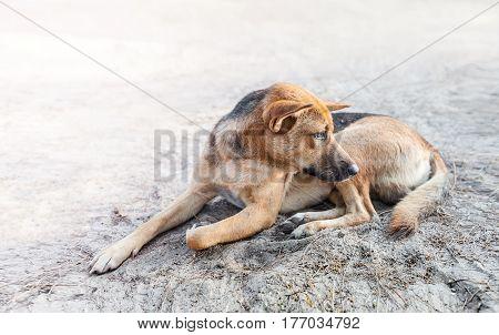 stray dog sleep on the sidewalk look as if hungry and sad dog