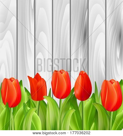 Illustration Beautiful Tulips Flowers on Wooden Background - Vector