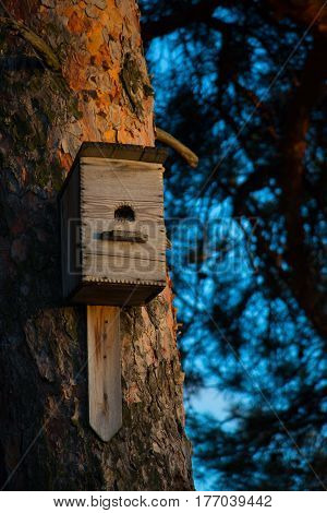 Beautiful wooden birdhouse on a tree in the forest