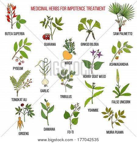 Best herbs for impotence treatment. Hand drawn set of medicinal herbs