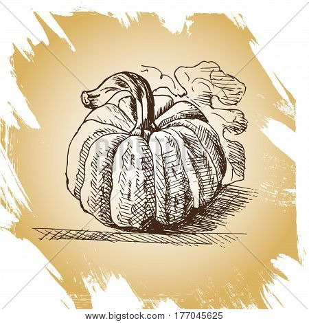 Vector Hand Drawn Vintage Illustration Of Pumpkin