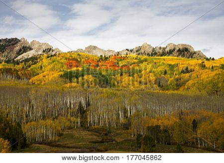 Autumn colors at Kebler Pass near Crested Butte Colorado