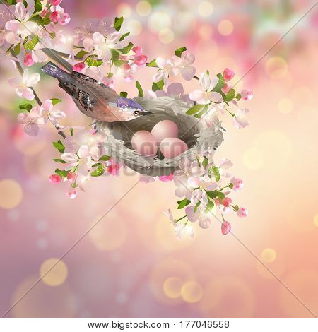 Vector background with spring Apple blossom. Bird at nest with eggs, Cherry blossoms branch on a white background