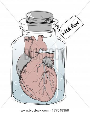 heart - vector anatomy picture isolated on white
