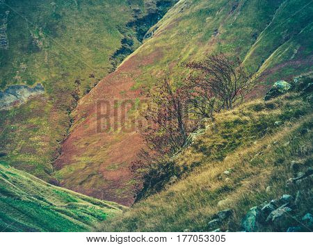 A Steep Rugged Hillside In Scotland With A Bush In The Foreground