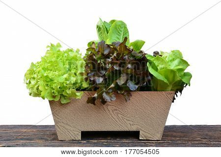 Vegetables in flower pot on wood table. Bio Healthy food herbs.Organic vegetables on wood table.