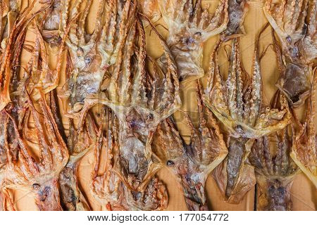 squids put down to dry in Tai O Lantau Island Hongkong poster