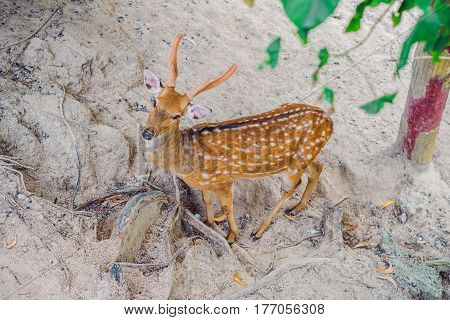 Deer In The Summer In The Forest