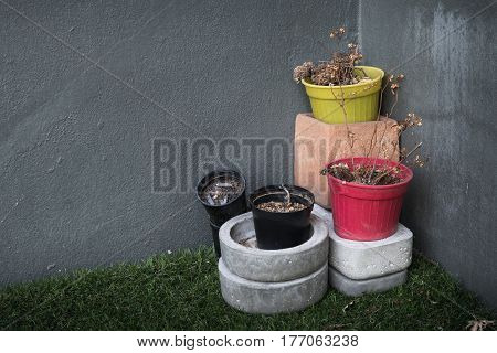 dead plant with plant pot still life image